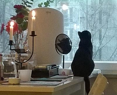 kissa katsoo ikkunasta lumisadetta